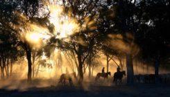 Paardrijden tijdens je verblijf in onze B&B