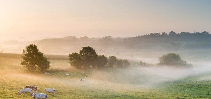 Ontdek de Vlaamse Ardennen vanuit B&B Dotter 17.
